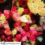 A rosy morning with Flowers In Season [photo: Portraits of Pyrmont]